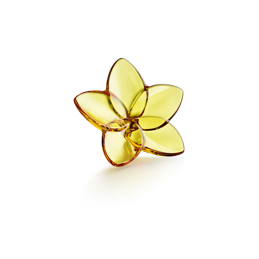 THE BLOOM COLLECTION, Ambre