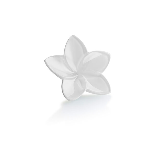 THE BLOOM COLLECTION, Blanc